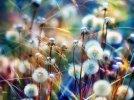 Biały latawiec - Wawele