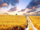 Fields Of Gold- Sting - Ariella28