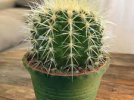 Bovska - Kaktus (Wersja Nightcore)