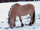 Mustang z Dzikiej Doliny - Nigdy Nie Ulegnę