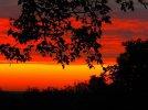 Przed nocą i mgłą - Alicja Majewska