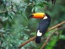 Rajski ptak - Dziadeklew i inni &