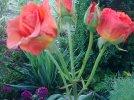 Tam, gdzie rosną dzikie róże - Kinga Preiss, Mariusz Drężek