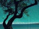 I cried for you - Katie Melua